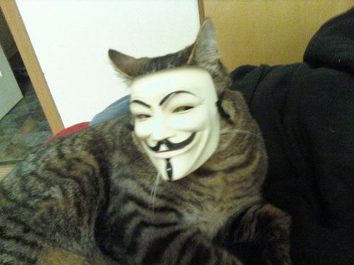 ANONYMOUS CAT 